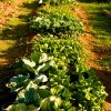 land management vegetable garden