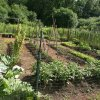 basic vegetable garden
